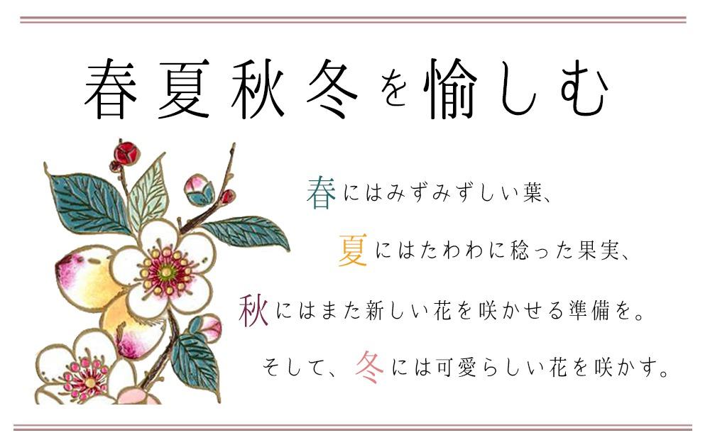 梅花(メイホア)